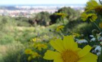 Fleurs et Barcelone