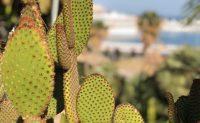 Parc des cactus